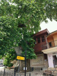 Bediüzzaman'ın Barla'daki İlk Evi ve Önündeki Çınar Ağacı
